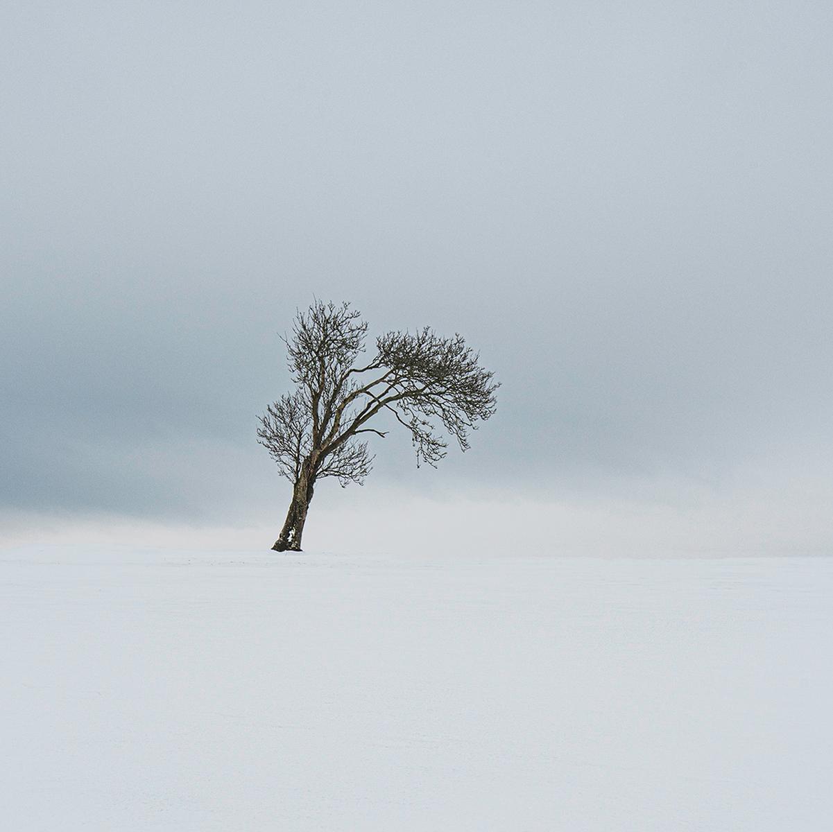 Winter-Tree_268