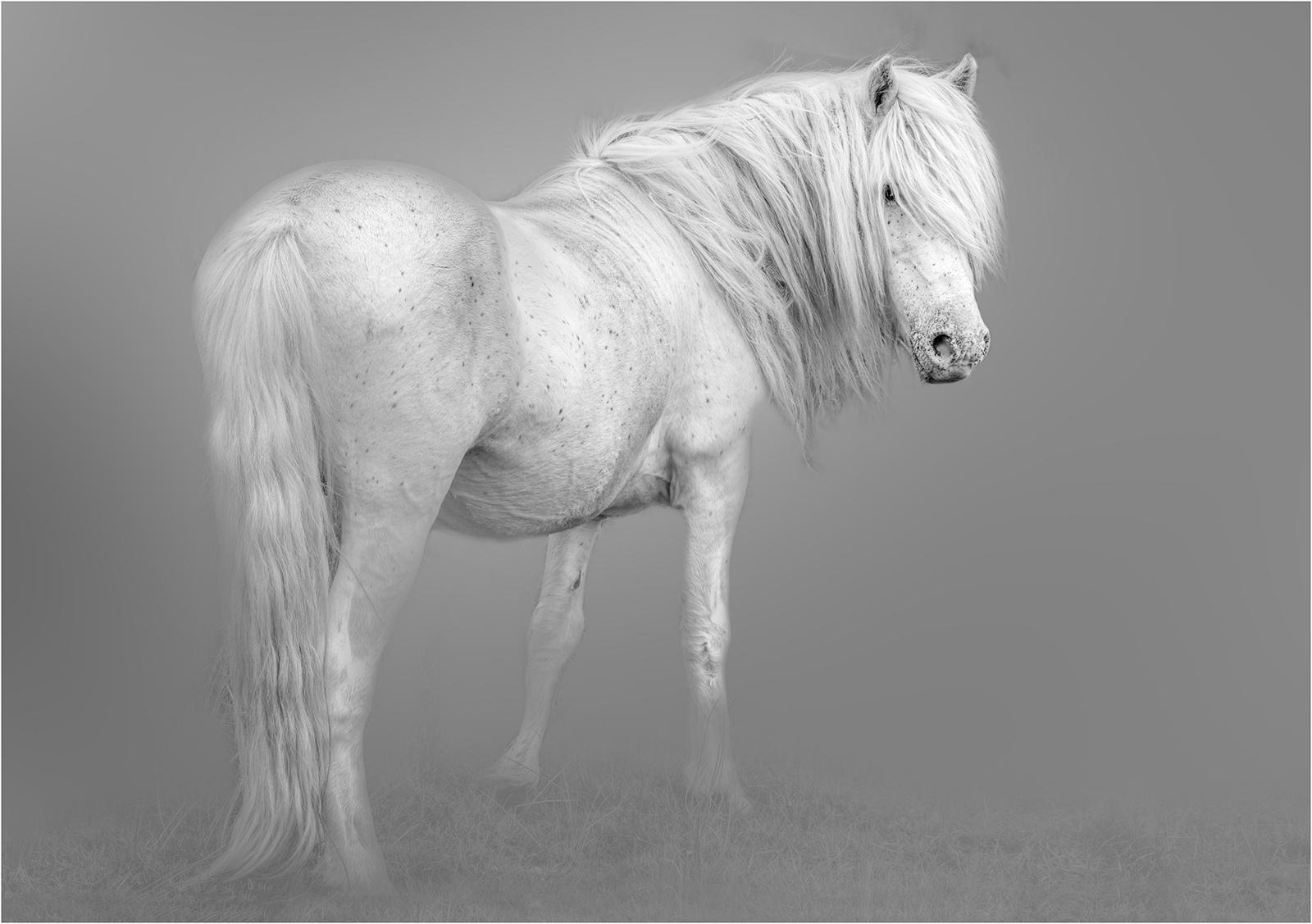 Eriskay Pony93