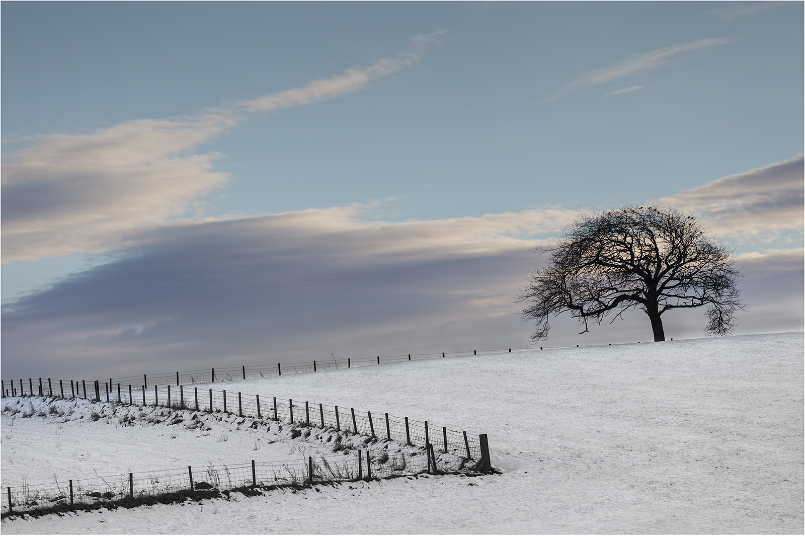 Tree in Winter Field93