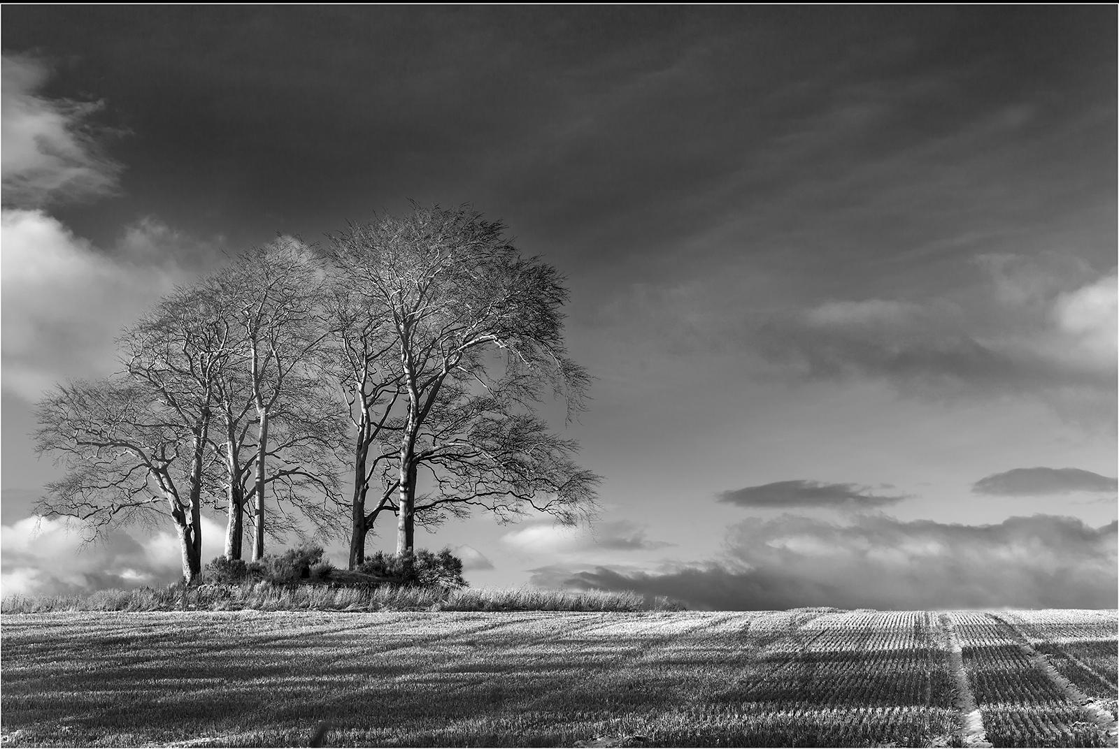 Winter Coppice93