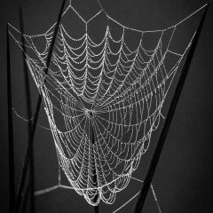 8 Web