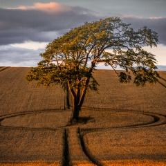 crop circle - John Kerr