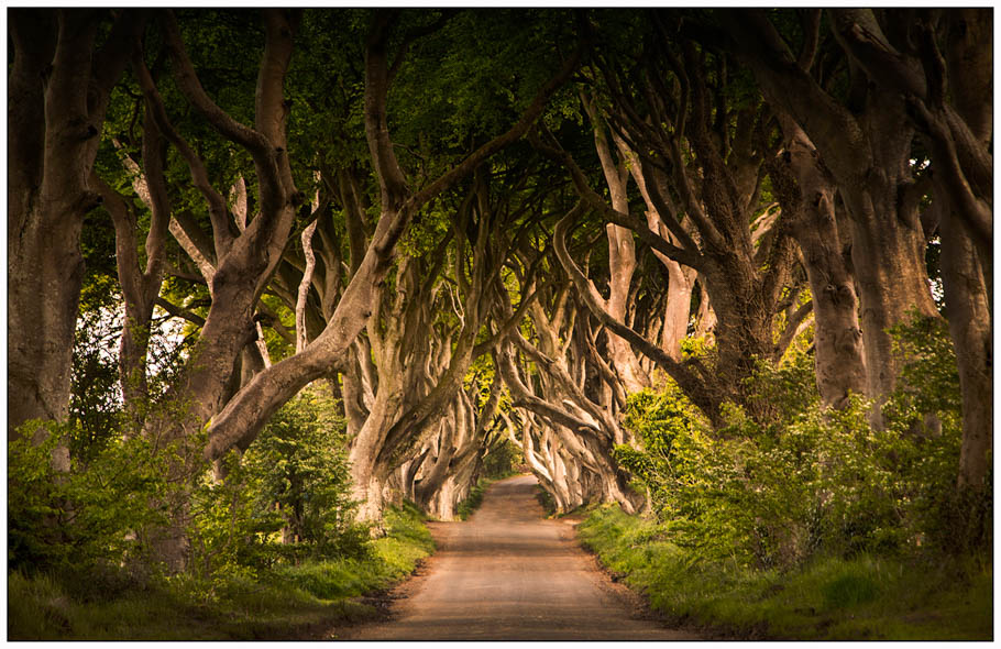 Dark-Hedges-Stewart-McQuillian_