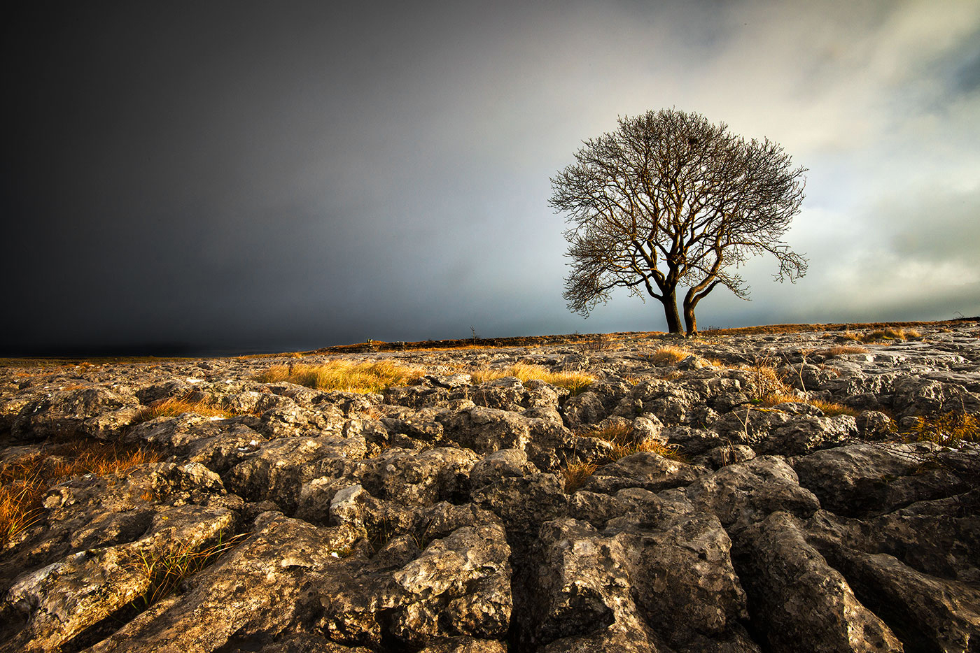 Dales Tree219