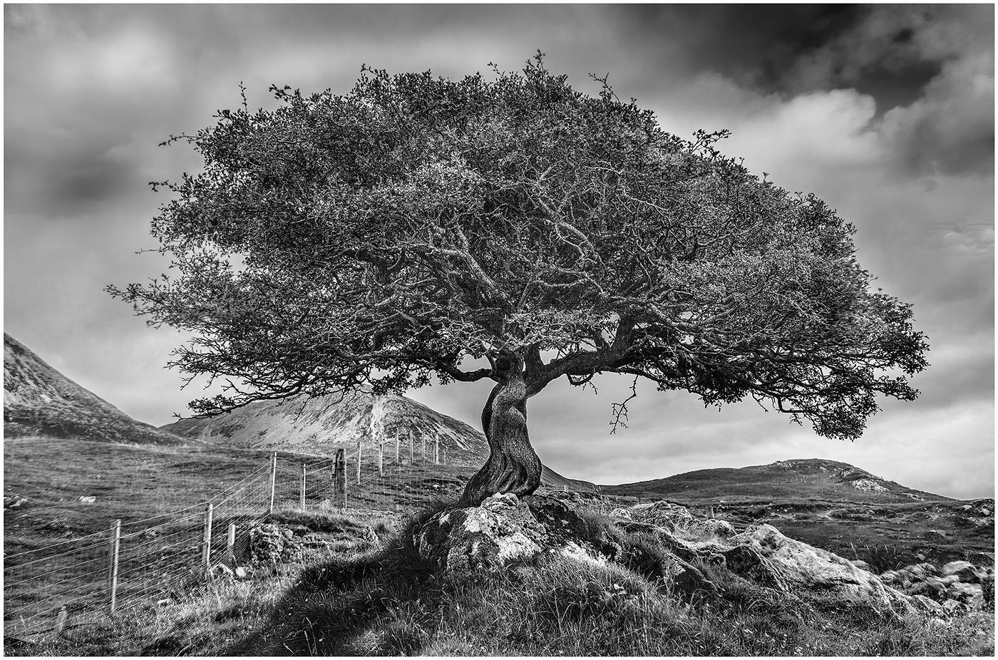 Skye Tree
