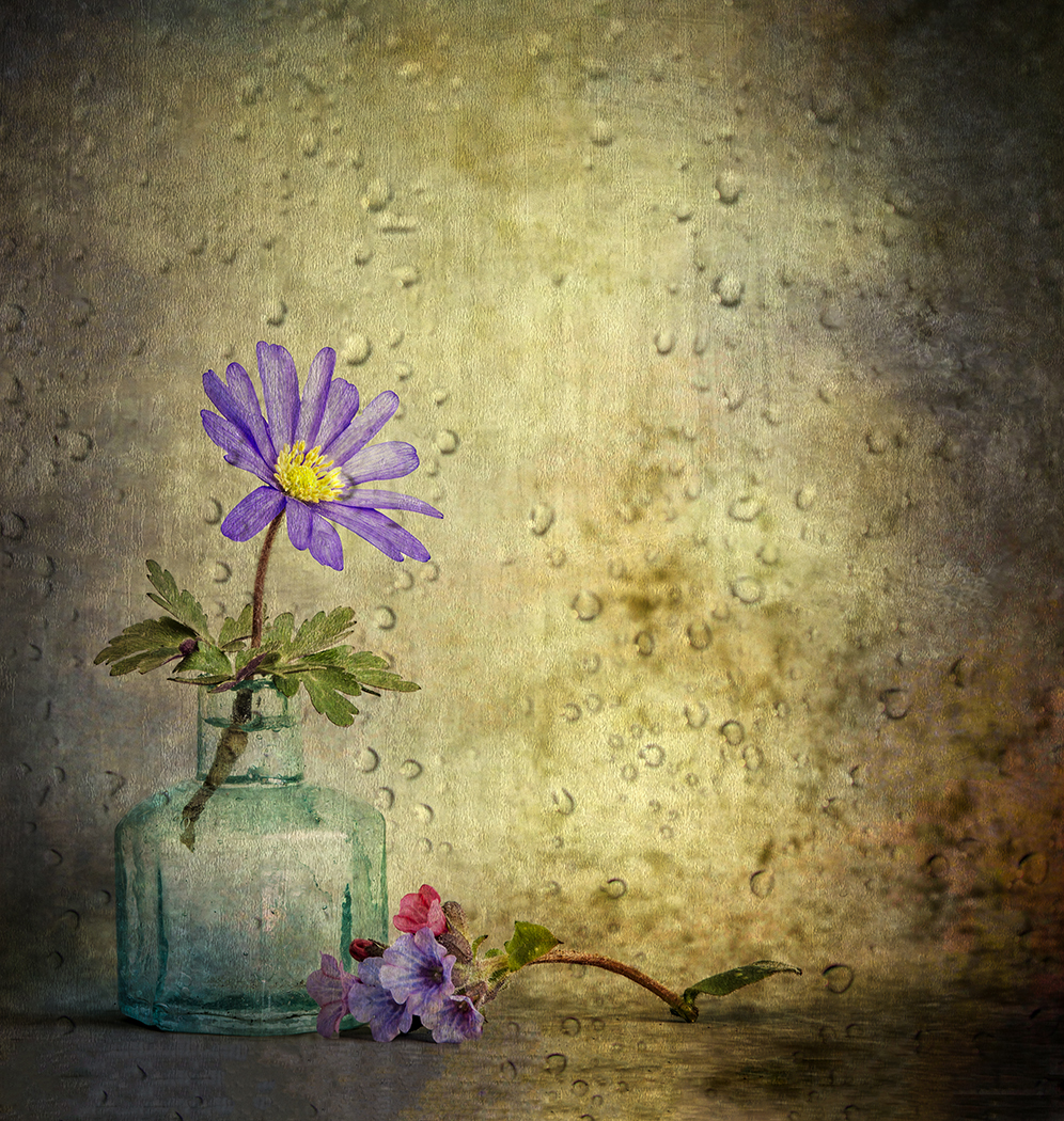 Spring Flowers219