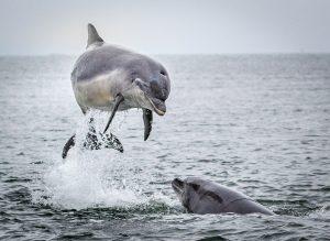 Wildlife Field Trip @ Black Isle and Moray Peninsular