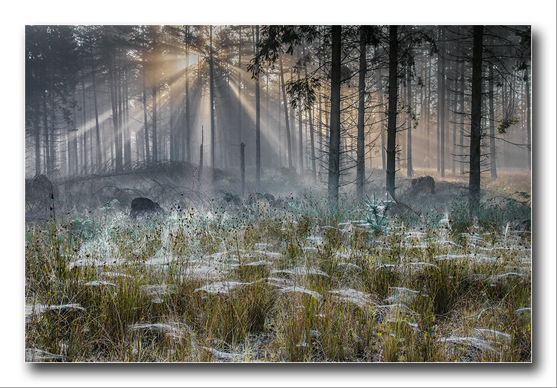 Alan Gray - Daybreak in spider woods