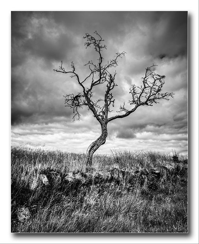 Alan Gray - Lone tree