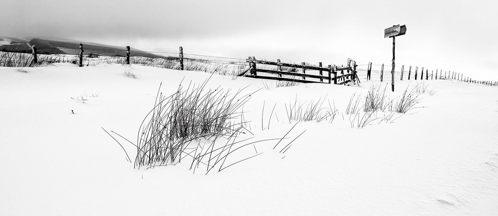 Fence-Line_252