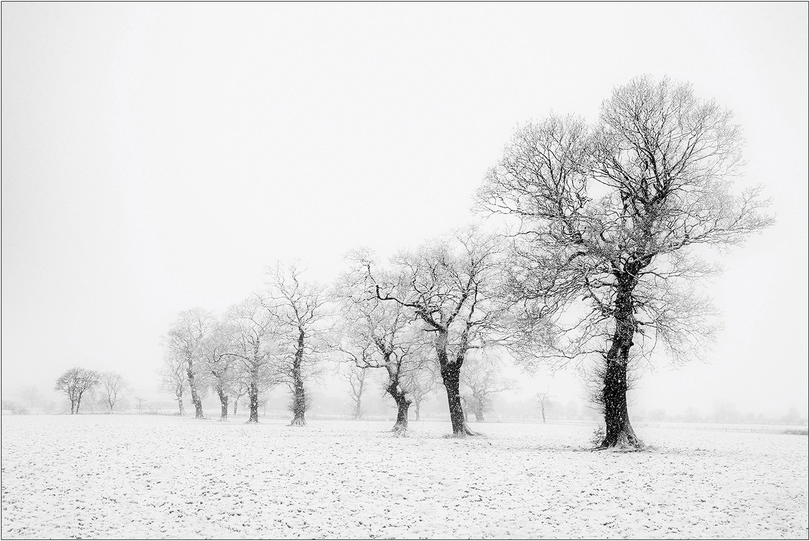 Tree-line-snow-storm_149