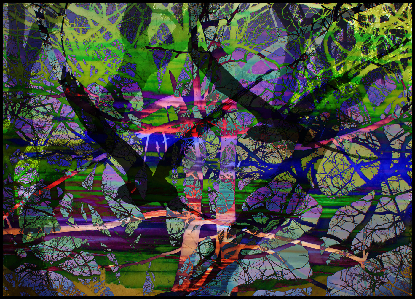 roberta houston - Trees