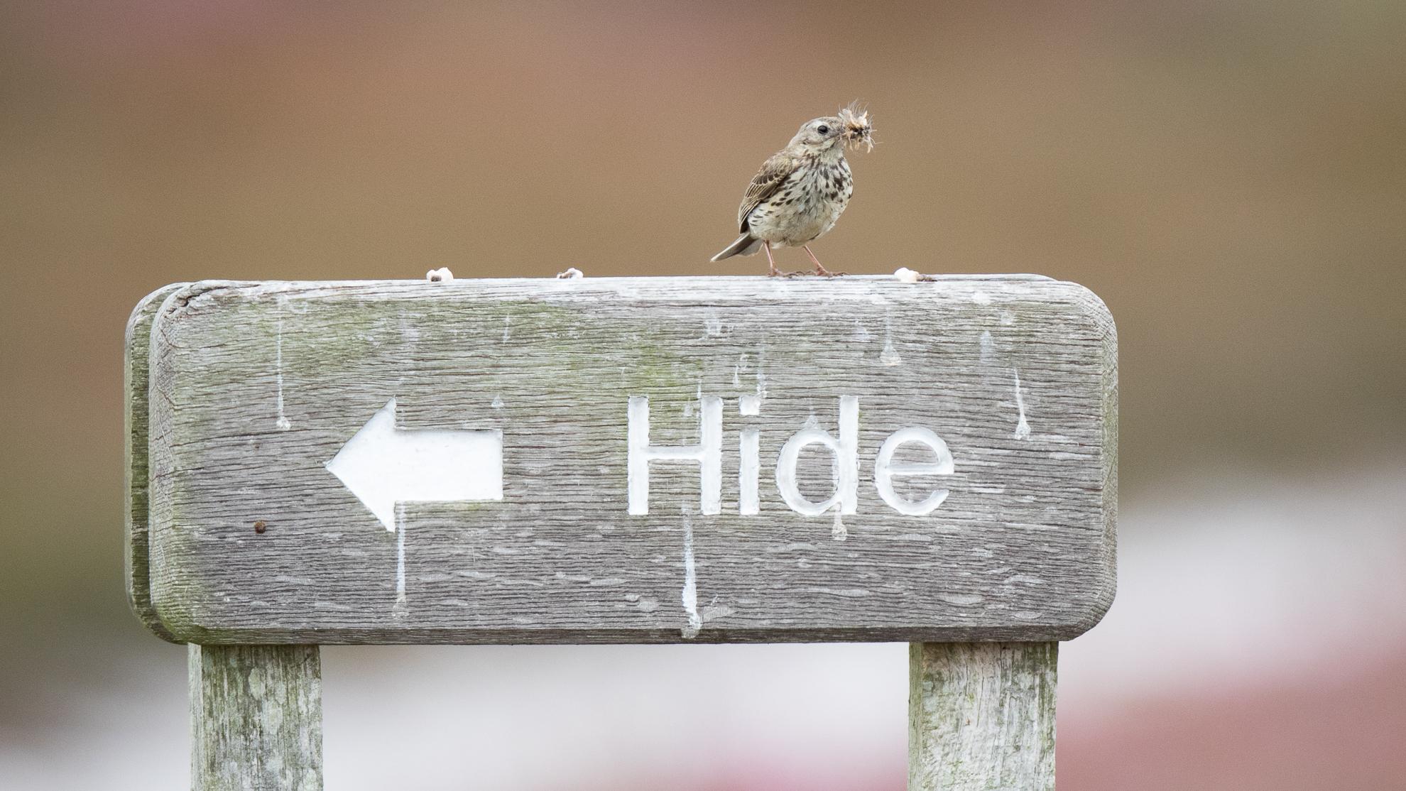 5 Bird Watching