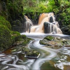 Linn Jaw Water - Alan Gray