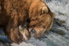 Brown-Bear-Fishing-Peter-Paterson